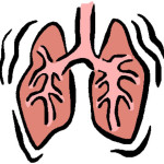 Расположение внутренних органов человека - легкие