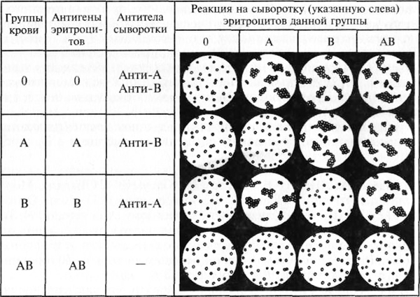 analiz-krovi17