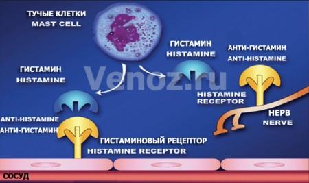 Антигистаминные препараты: принцип действия антигистаминов