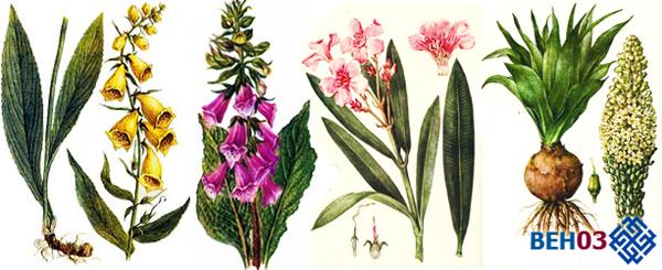 Сердечные гликозиды: список растений