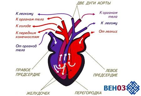 Кашель при сердечной недостаточности: симптомы проявления