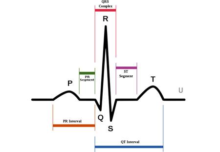 Кардиограмма сердца: расшифровка кардиограммы