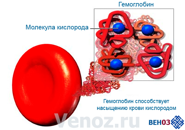 Гемолитическая анемия: что это такое при нарушении синтеза гемоглобина