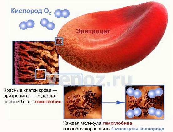как понизить уровень холестерина у беременных